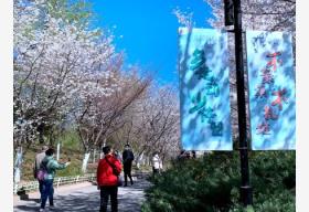 清明期间 北京11家市属公园取消各类文化活动