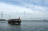 山東榮成:特色海洋旅遊引遊人