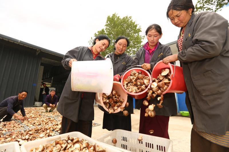 理塘香菇基地.jpg